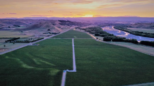 aerial view of vineyard at sunset