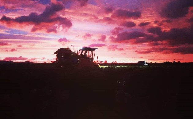 Harvester silhouetted by sunrise