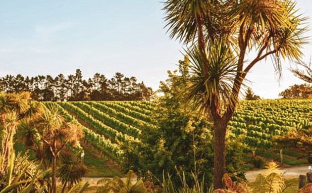 Coopers Creek Vineyard image, wines and trees