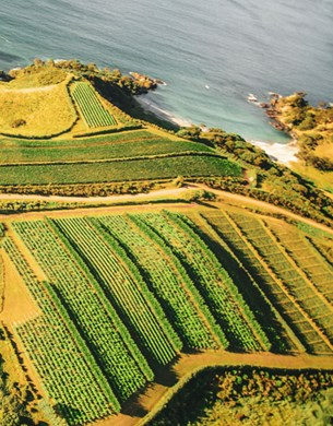 Aerial show of man o war vineyards and the sea