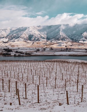 Mishas vineyard in winter, snowy