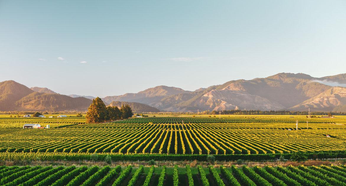 Marlborough Wines And Vineyards New Zealand Wine