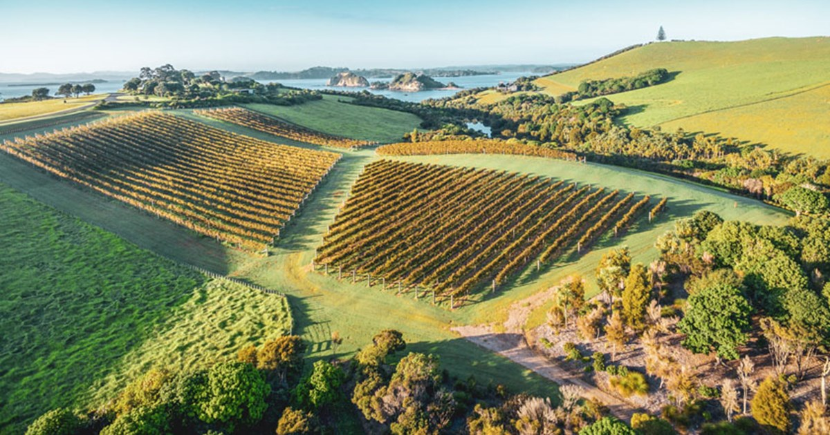 Northland Wines and Vineyards | New Zealand Wine