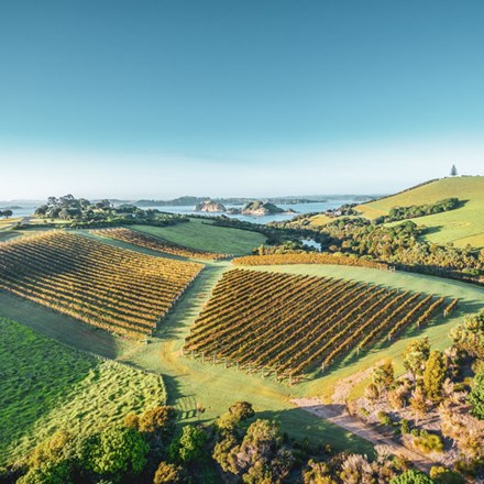 Aerial image of the landing vineyard
