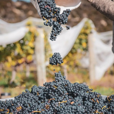 New Zealand Winegrowers | New Zealand Wine