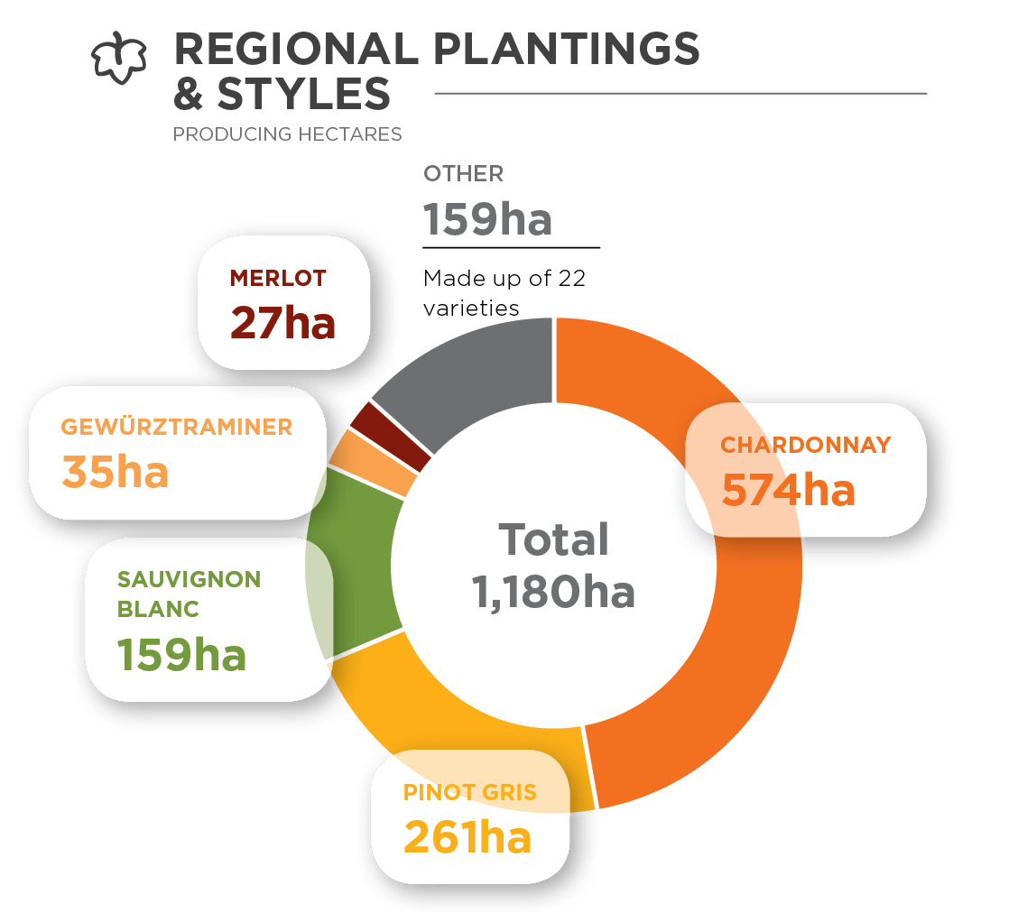 Donut chart showing the hectares of different varieties planted in Gisborne
