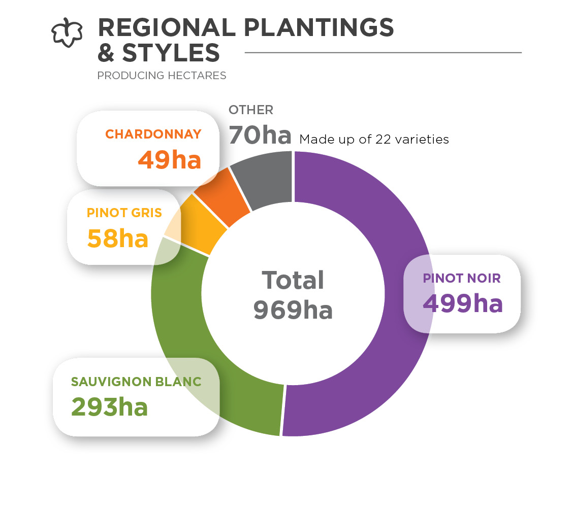 Donut chart showing the hectares of different varieties planted in Wairarapa