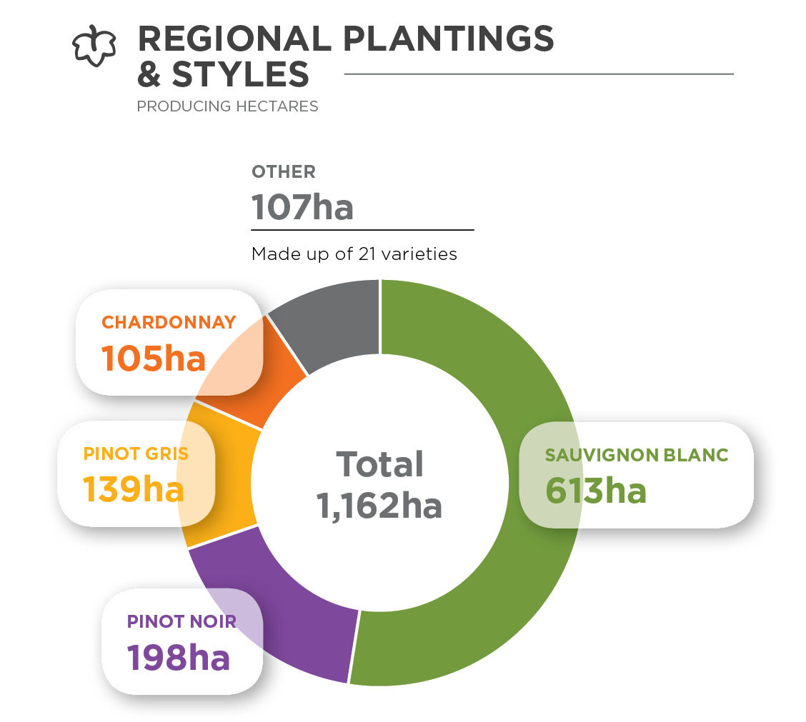 Donut chart showing the hectares of different varieties planted in Nelson