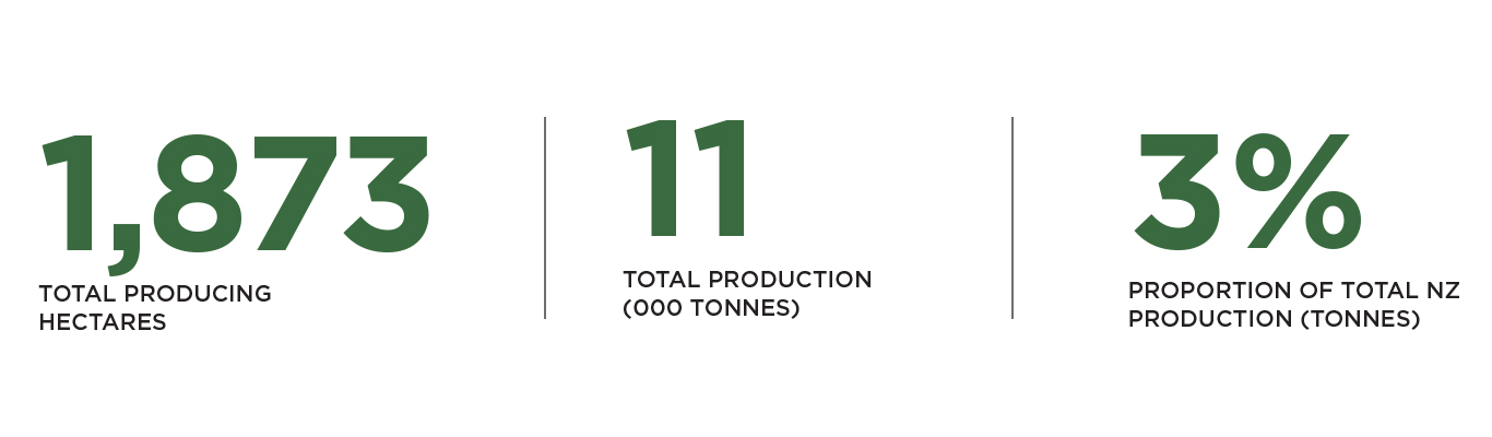 Infographic showing total wine production in Otago