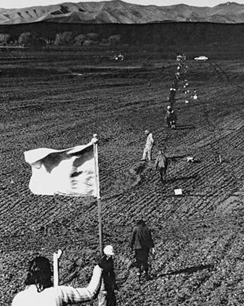 Old photo of planting in Brancott vineyard