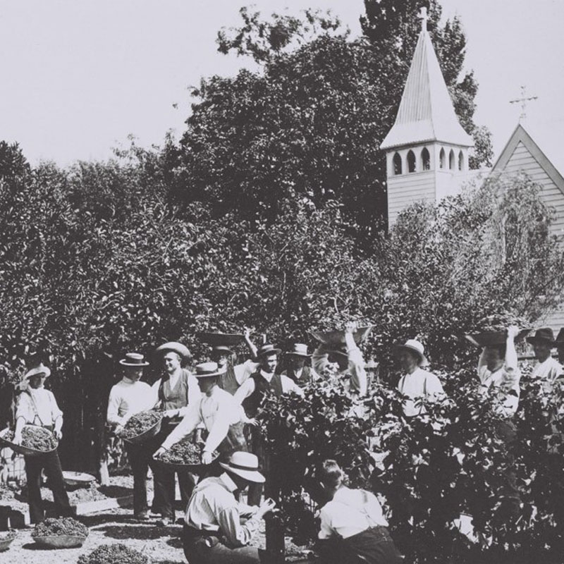 Harvest time outside the Mission Estate Church in Meeanee, late 1800s