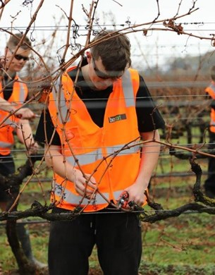 Young Viticulturist finalists in action.
