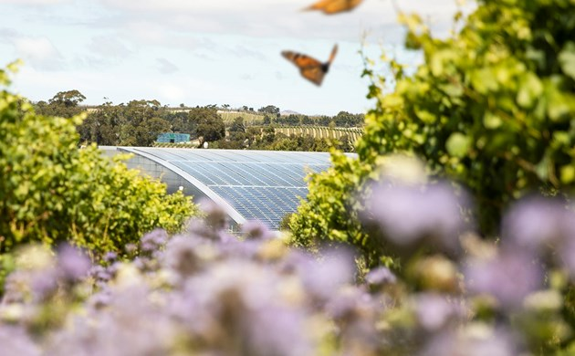 Butterflies infront of Solar Panels at Yealands