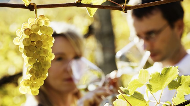 People smelling wine out of a glass behind a grapevine.