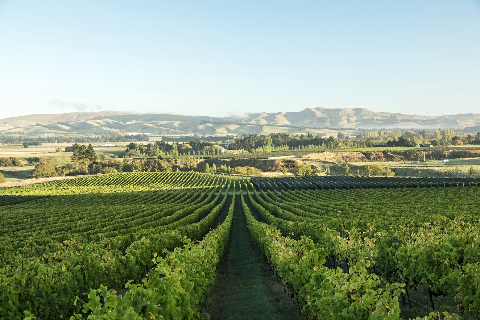 Image result for Waipara Valley