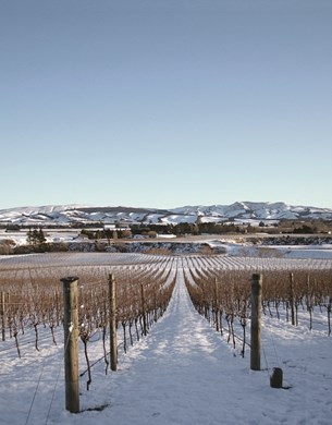 greystone wines in winter, snow on the ground and no leaves on the vines