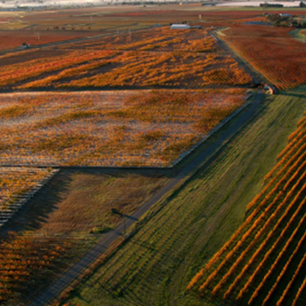Birds eye view of Hawke's Bay vineyard