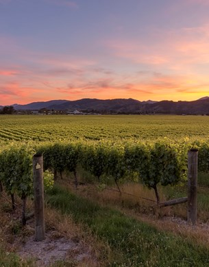 Brightwater Vineyard with sun setting over mountains