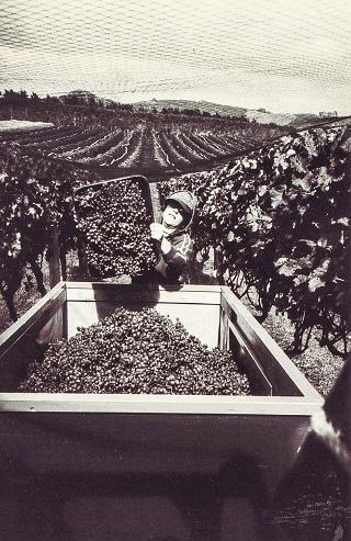 An old photo of a person working at Te Motu Vineyard
