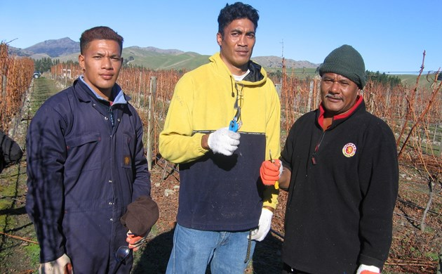 The first ever RSE workers in Marlborough