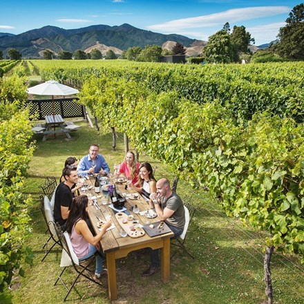 A group dining between rows of vines at Saint Clair vineyard in Marlborough.