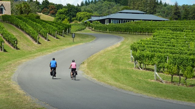Cyclists biking up the road between the vineyard at Blackbarn, Hawke's Bay