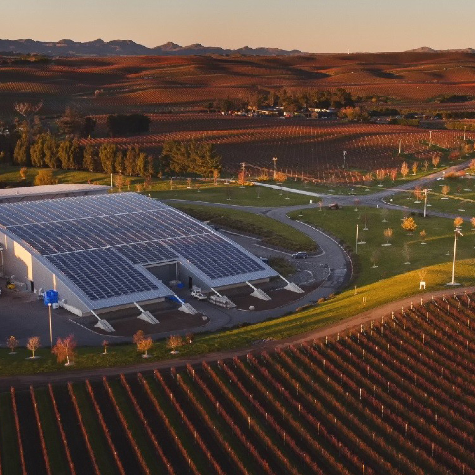 Solar panels seen from above at Yealands Vineyard
